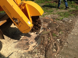 Stump to grind that has grown into the side of a concrete drivway.